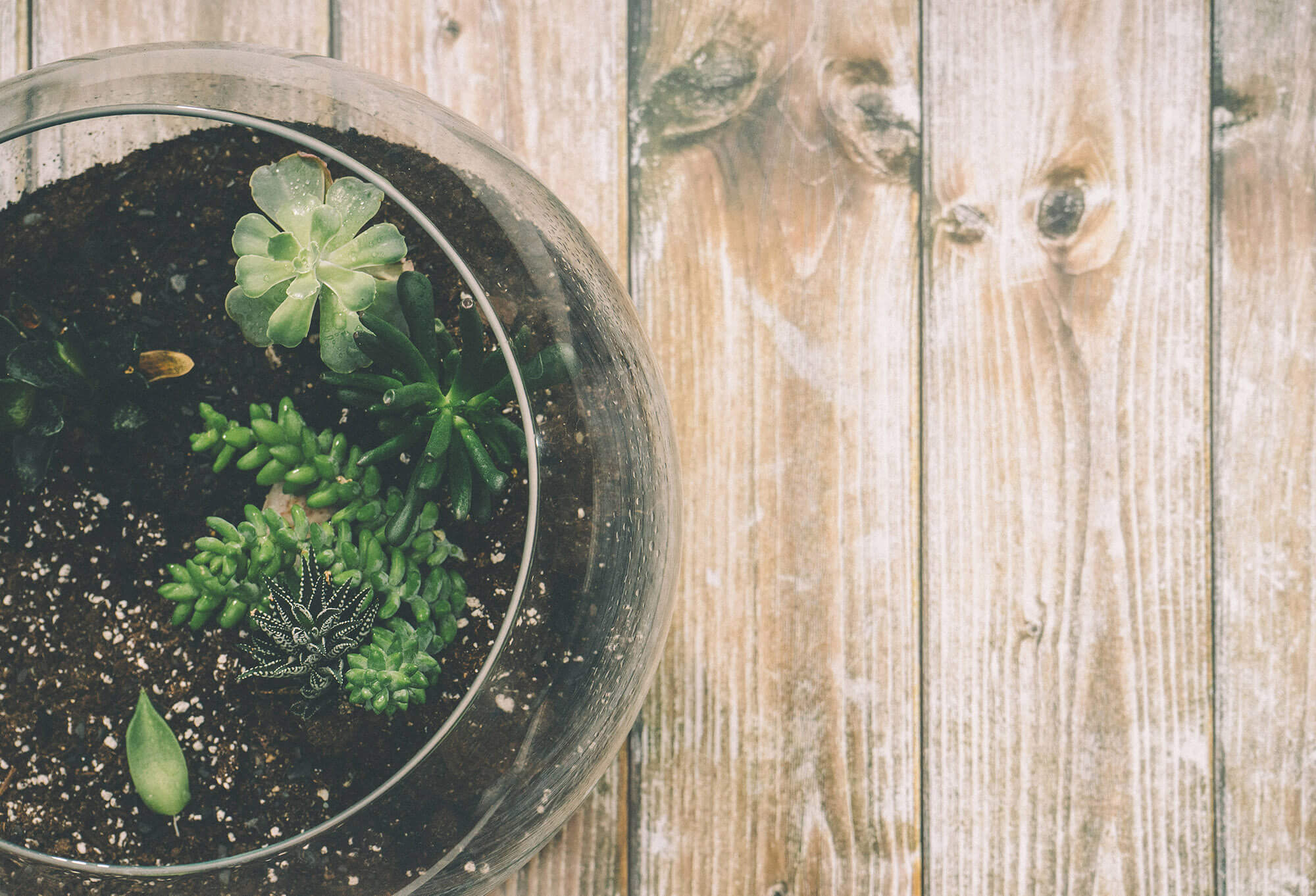 A glass bowl of potted succulent plants sits on the far left side of the image and sits on top of aged wood planks.